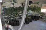marihuana_5028 (600 x 399)