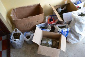Uhapšeni muškarci iz Jagodine zbog uzgajanja, posedovanja i prodaje marihuane!!!