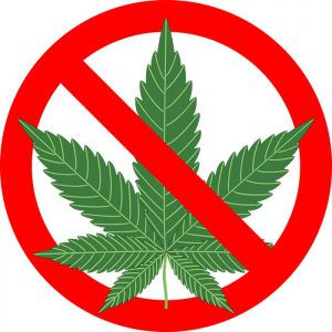 Pripadnici MUP-a u Novom Pazaru zaplenili su više od kilogram i po marihuane!!!