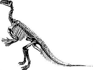 SKELET star 150 miliona godina prodat za 2,3 miliona dolara!!!
