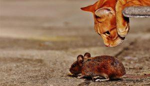 VIC DANA-Kad mačke nema...!!!