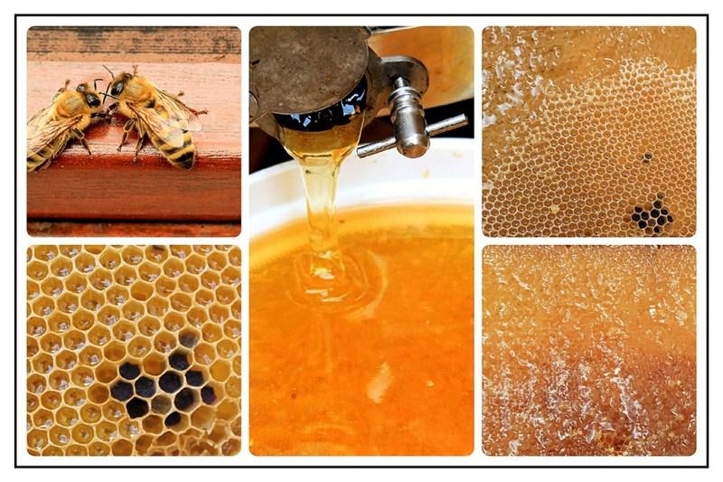Izložba meda i pčelinjih proizvoda sutra na čačanskom gradskom trgu!!!