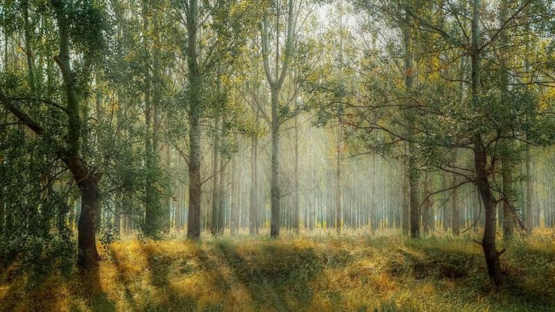 Obeležava se Međunarodni dan šuma !!!