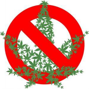 Uhapšen L.L. (1999) iz Kraljeva zbog neovlašćene proizvodnje i stavljanje u promet opojnih droga !!!