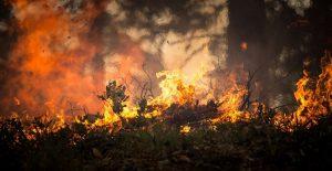 Preventivne mere zaštite radi sprečavanja nastanka požara i elementarnih nepogoda u opštini Topola !!!