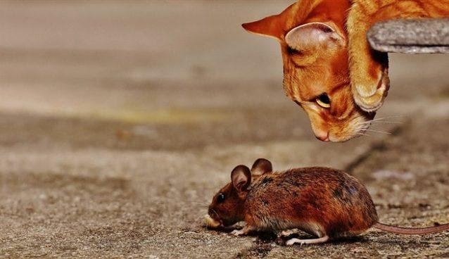 VIC DANA-Lov na miša !!!