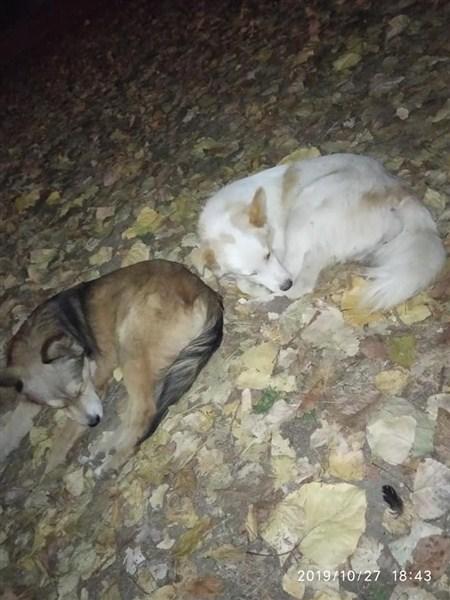 """U Ćupriji osnovano Udruženje za zaštitu životinja """"Ravno Štit""""!!!"""