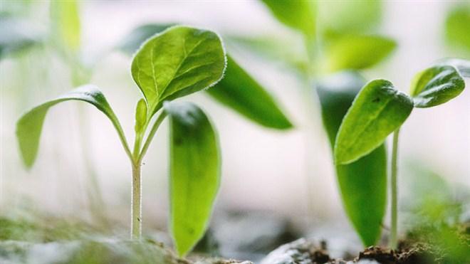 Obaveštenje za poljoprivredne proizvođače i registrovana poljoprivredna gazdinstva na teritoriji opštine Ćuprija !!!