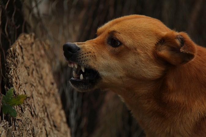 U Jagodini pas sinoć izašao iz dvorišta i ujeo sedam osoba !!!