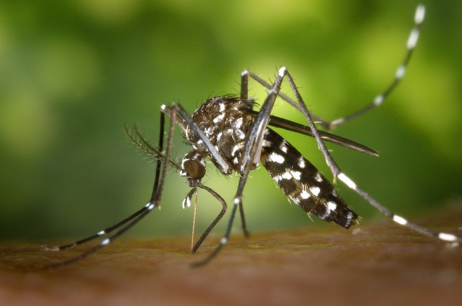 U četvrtak 17. septembra sprovešće se akciju suzbijanja kršelja i larvi komaraca na teritoriji Opštine Ćuprija !!!
