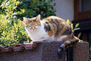 VIC DANA-Sedi mačka na ogradi i puši !!!